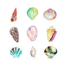 watercolor shell print
