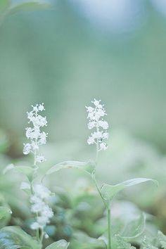 Pastels - Sage Green & Blue
