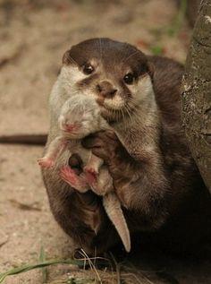 Mummy Otter.