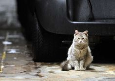 Feral cats earn their keep at San Antonio Country Club