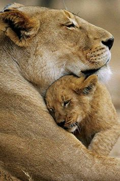 The Lioness within... oh Lord... keep my children safe......