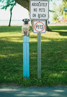 http://europug.eu/ Pug On A Sign