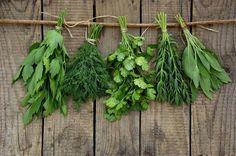 Conheça os benefícios das principais ervas aromáticas - http://comosefaz.eu/conheca-os-beneficios-das-principais-ervas-aromaticas/