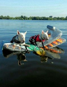 Summer feeling in Holland