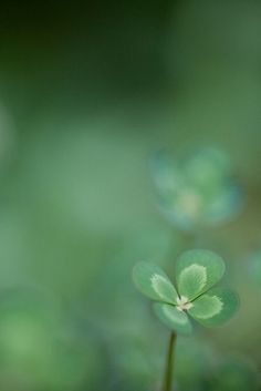 4 Leaf Clover, it's going to be a beautiful day.
