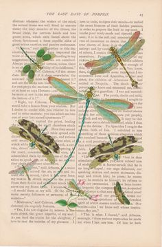 dragonfly dictionary