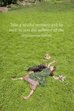 Chamomile Lawn at Babylonstoren