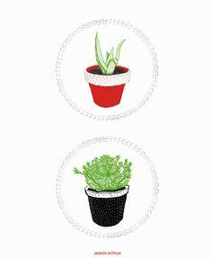 Planta y Planto