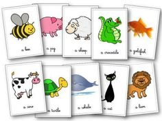 Flascards animaux
