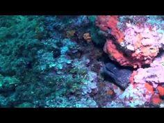 Inmersión en Carall Bernat - Illes Medes