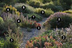 wulfenii 7 : Centaurea bella 8 : Lomelosia cretica 'Jeanne et Jean' 9 : Phlomis lychnitis Dry Garden, Gravel Garden, Garden Plants, Plant Design, Garden Design, Sacred Garden, Mediterranean Plants, California Garden, Coastal Gardens