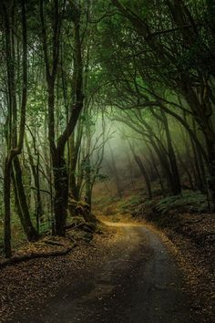 """sublim-ature: """" Garajonay, Spain Florencio Barroso """" – 2020 World Travel Populler Travel Country Forest Path, Tree Forest, Beautiful World, Beautiful Places, Beautiful Pictures, Foto Nature, Mystical Forest, Amazing Nature, Belle Photo"""
