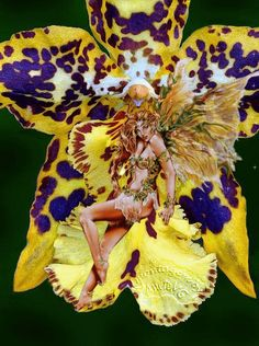 fadas orquídeas