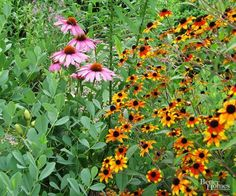 If you want a colorful garden but don't have a lot of time to fuss over it, why not select easy-care classics like coneflower and black-eyed Susan. Both of these heat- and drought-resistant plants bloom from summer to fall with minimum care. Plus, they make beautiful bouquets you can enjoy all summer./