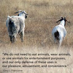 ameatfreemonth.org #animalrights #animalwelfare #vegan #veganism #inspiration #quote #health #animals