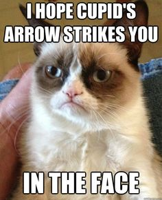Grumpy cat frowns on your shenanigans. Grumpy cat is not impressed. I wonder if grumpy cat is an engineer. I did find some Grumpy Cat gifs: Grumpy Cat say \ Grumpy Cat Quotes, Funny Grumpy Cat Memes, Funny Animal Memes, Hilarious Memes, Funny Animal Pictures, Funny Pics, Funny Animals, Grumpy Kitty, Funniest Animals