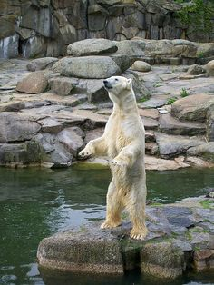 Berlin Zoo- a peaceful place in a crazy city