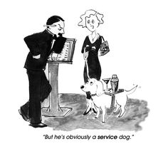 Service Dog Cartoon Dog, Dog Cartoons, Black And White Dog, Jokes For Kids, Service Dogs, Training Your Dog, Dog Photos, Animal Rescue, Pet Dogs