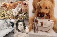 Gucci Forever Now Ad Campaign Fall/Winter 2013/2014 with Golden Retriever