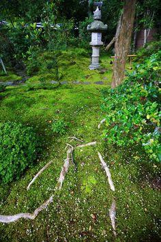 Dainei-ken garden, Nanzen-ji temple, Kyoto 京都南禅寺大寧軒の苔と灯篭