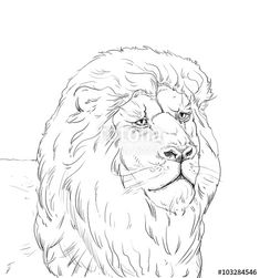 "Download the royalty-free photo ""Lion head, sketch on white background, portrait, Illustration, Black and white"" created by sofiartmedia at the lowest price on Fotolia.com. Browse our cheap image bank online to find the perfect stock photo for your marketing projects!"