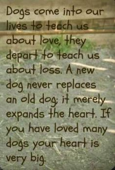 """As my Aunt Liana said, """"The only thing God did wrong when he gave us our pets is that he didn't let them live long enough. (Please be kind to your pets and remember they love you unconditionally). Yorkies, Chihuahuas, Pomeranians, Pekingese, Havanese Puppies, Bichons, Dachshund Puppies, Chihuahua Mix, Maltipoo"""
