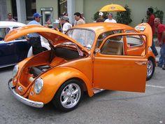 orange bug 3.JPG