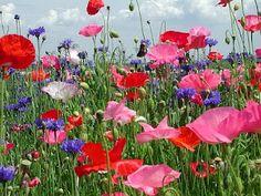 I want a wild flower garden!!