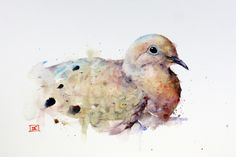 Mourning Dove ~ artist Dean Crouser  #art #watercolor
