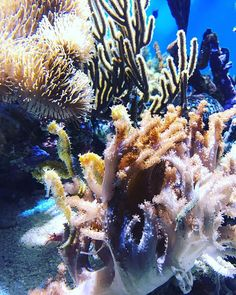 I have so many awesome photos from our trip to Carmel and Monterey! These are little sea horses from the Monterey bay aquarium #montereybaylocals - posted by Lee Anna Strandberg https://www.instagram.com/thehappyhiker - See more of Monterey Bay at http://montereybaylocals.com