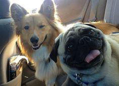 15 Dúos De Mascotas Que Son Exactamente Como Tú Y Tu Mejor Amigo