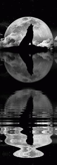 Aullando a la luna