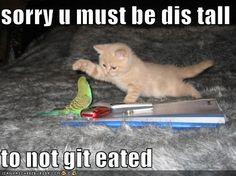 Lolcat Funny Cute | bird must be taller to not get eaten by kitten