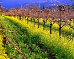 Cheers to Spring in California wine country. Read this blog about how beautiful it is in the winery during Spring. #CAwineclub #blog #wine #wineries #Spring