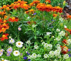 Cele mai rezistente flori la umbra - Casa și Grădina Garden Projects, Planting Flowers, Mai, Diy And Crafts, Wisteria, Home And Garden, Herbs, Exterior, Plants