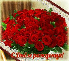 Много роз на День <strong>поздравления с днем рождения открытки на форум</strong> Рождения