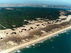 Coto de Doñana (Huelva), Vista general de la playa y el pinar.  Al frente la desembocadura del Guadalquivir y la población de Sanlucar de Barrameda, en la provincia de Cádiz.