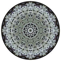 snowflake botanical mandala
