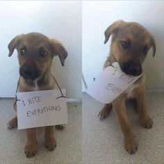 IF you missed the Morning Funny Animal Picture Dump, you can see them by clicking HERE