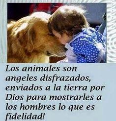 ...MUCHAS PERSONAS TARDAN TODA SU VIDA PARA POR FÍN VER ANGELES, SIN DARSE CUENTA QUÉ ESTAN RODEAD@S DE ELLOS, Y MUCHOS SON LOS OJOS, Y GUÍAS  CON LOS QUE VEN MUCHOS DE NUESTROS HERMAN@S  CON CAPACIDADES DIFERENTES, Y OTROS AL REGALAR  AL REGALAR AMOR ACAMBIO DE UNA CARICÍA...♥  MIGUEL ÁNGEL GARCÍA