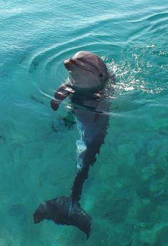 A Delightful Dolphin.