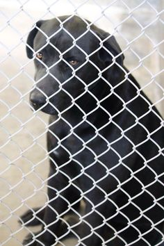 SUPER URGENT!!!!!!! There is a list today 3/3/14 and this girl is on it. Need an ADOPTER OR FOSTER NOW!!!  Odessa Animal Control, TX  Kennel A30 -- $51 adoption fee  PLEASE CONSIDER FOSTERING IF YOU CAN'T MAKE A PERMANENT COMMITTMENT!   https://www.facebook.com/speakingupforthosewhocant?ref=br_tf#!/speakingupforthosewhocant/photos/a.573572332667009.1073741829.248355401855372/738313649526209/?type=1&theater