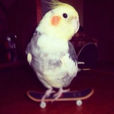 For some reason he loves his tech deck <3