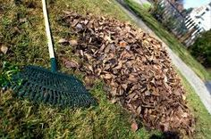 Image result for autumn lawn preparation