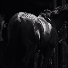www.horsealot.com, the equestrian social network for riders & horse lovers | Equestrian Photography : Astrid Harrisson.