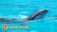 Learn all about dolphins in this video from Nature of God - Whales, Waves, and Ocean Wonders!