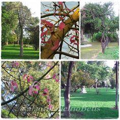 Jardin de las Delicias 2