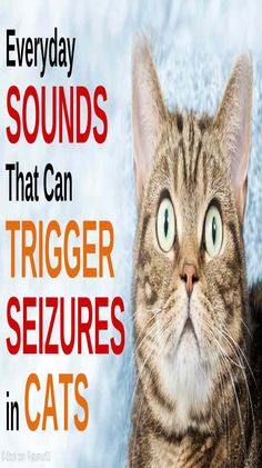 Researchers in the UK have discovered feline audiogenic reflex seizures (FARS) disorder that occurs in older cats and is triggered by certain sounds. Wall E, Cat Health Care, Cat With Blue Eyes, Mama Cat, Seizures, Cat Behavior, Pet Care Tips, Cat Facts, Crazy Cats