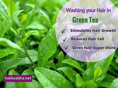 Green tea has amazing benefits for your hair. The rich antioxidants & caffeine in green tea improve hair growth, reduce hair loss and make hair super shiny. Herbs For Hair Growth, Hair Growth Tips, Natural Hair Care Tips, Natural Hair Styles, Green Tea For Hair, Stem Challenge, Reduce Hair Fall, Hair Rinse, Natural Haircare
