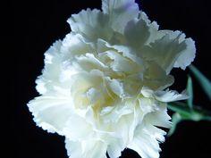 Les 153 Meilleures Images Du Tableau Fleur Idee Tatouage Sur